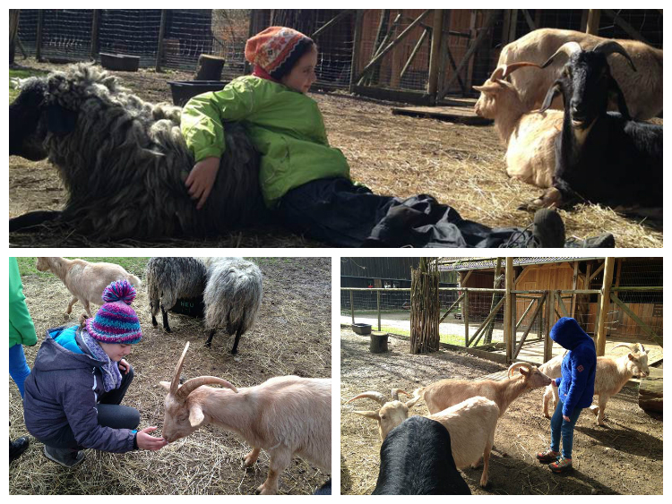 Vom Glück Schafe zu hüten
