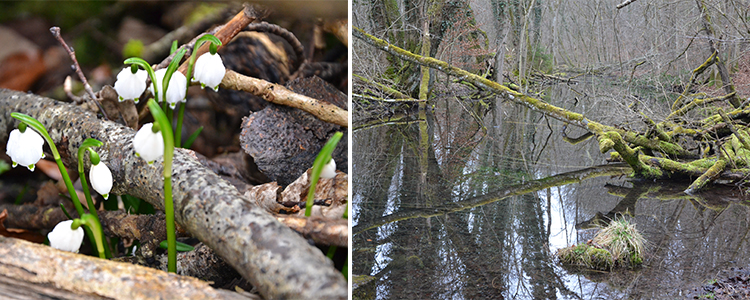 Umweltbildung Fortbildung Naturerlebniszentrum Burg Schwaneck